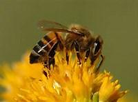 """Astrid Bowers-Veenman  """"Beekeeping"""""""